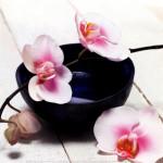 Shiatsu Krankenkasse, Preis Massage, Prinzip Yin Yang